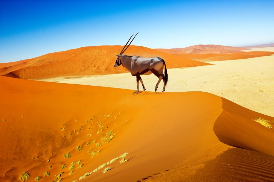 Öken i Namibia
